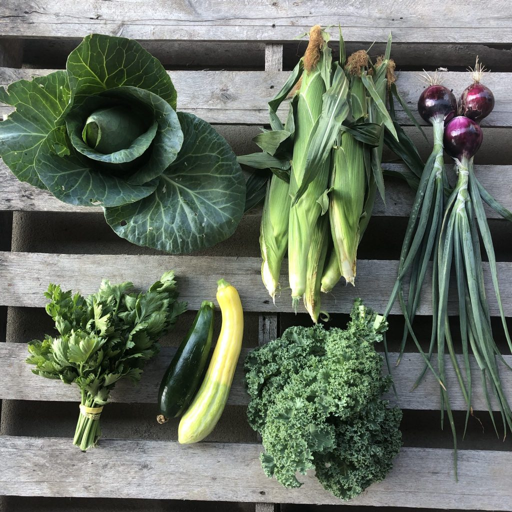 Week 6 CSA Newsletter 2019 - Shared Legacy Farms